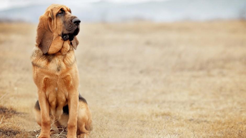JRC Bloodhound Donation