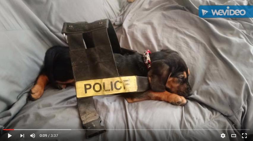 The Bloodhound Run (Music Video)
